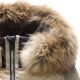 Heloise Splendid women's ski jacket + fur